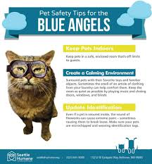 Image result for Seafair cats images