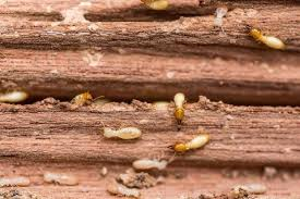 Image result for Right Termite Control Service