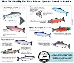 Fish Species Soldotna Chamber Of Commerce