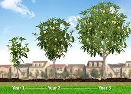 Plants  North Carolina Native Plant SocietyWhen Do Cherry Trees Bear Fruit