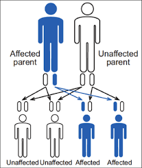 Inheritance Patterns New Inheritance Pattern Hemophilia Federation Of America