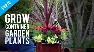 beginners guide to container gardening