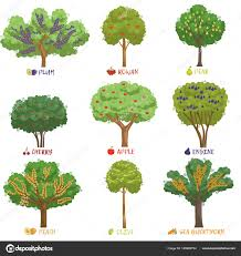 Here Is Diversity For You  40 Fruit Trees In One  Farming SecretsDifferent Fruit Trees