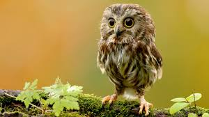 Best 40+ Owl Wallpaper on HipWallpaper ...
