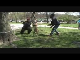 pitbull dog fights in the hood. Brooklyn Hood Pits For Pitbull Dog Fights In The
