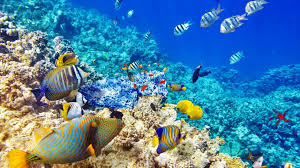 colorful coral reef wallpaper. Colorful Coral Reef Wallpaper Throughout
