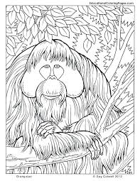 Animal Kingdom Coloring Book Pdf Nature Coloring Pages Animal