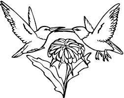Small Picture Perfect Hummingbird Coloring Page 18 On Coloring Pages for Kids