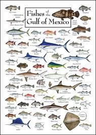 Texas Fish Chart Saltwater Fish Chart Salt Water Fish Tumblr Saltwater Fish