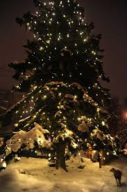 Christmas Tree Lighting Anchorage Rosie Under A Huge Lit And Glowing Christmas Tree Snow All