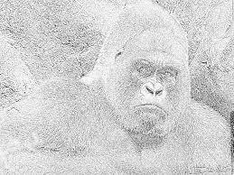 Dessin Dessin De Gorille Gratuit