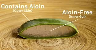 Image result for free pictures of aloe vera