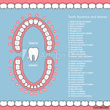 Jaw Chart Tooth Chart With Names Dental Infographics Teeth In Jaw