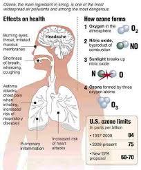 cancer essay outline lung cancer essay outline