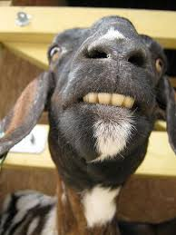 do i have anything stuck in my teeth goat funny