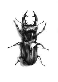dear artist beetle dear artist