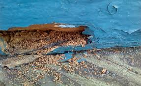 Image result for piles of sawdust around beams