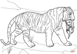 Coloriages Tigres Les Animaux Page 2