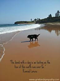 Dog Passing Quotes Impressive 48 Comforting Loss Of A Pet Quotes