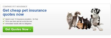 Multiple Insurance Quotes Quotes multiple motorcycle insurance quotes carinsurancepawtop 46