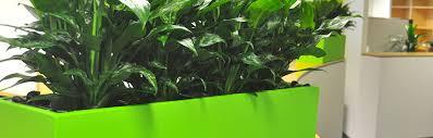 best indoor office plants. Brisbane Indoor Plant Hire For Milton Office Plants Best Office Plants