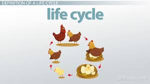 What Is A Life Cycle Definition Stages Examples