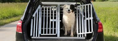 Traveling With <b>Dogs</b> in a <b>Car</b> | Hill's <b>Pet</b>