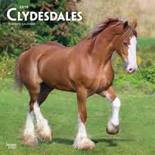 clydesdales 2019 wall calendar calendars books gifts