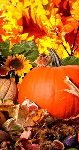 fall wallpaper iphone 6 pumpkin. Fine Wallpaper 852x1608 IPhone 6 On Fall Wallpaper Iphone Pumpkin T