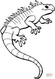 iguana coloring page free printable coloring pages lizard craft coloring pages coloring
