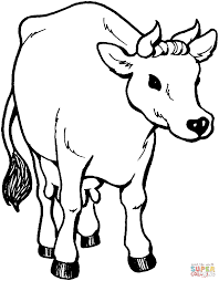 Small Picture Cattle coloring pages Free Coloring Pages