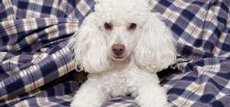 introduction of can dogs use hydrocortisone cream