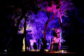 Descanso Enchanted Forest Of Lights