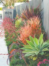 Small Picture Best 25 California garden ideas on Pinterest Drought tolerant