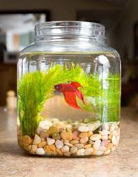 How To Decorate A Fish Bowl glass fish bowl decoration ideas decorative fish bowl plants 2