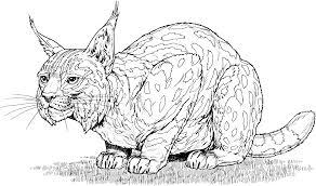 Dessins Gratuits Colorier Coloriage Lynx Imprimer