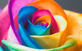 colorful rose wallpapers. Modren Wallpapers Neon Rainbow Roses Wallpaper For Colorful Rose Wallpapers I