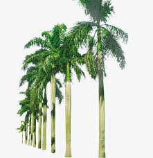 palm beach, Fake Palm, Trees, Plant PNG and PSD Palm Beach, File for Free Download