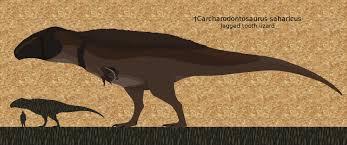 carcharodontosaurus size carcharodontosaurus 9 23 16 by paleop on deviantart