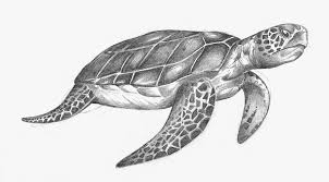 Small Picture Turtle Drawings olegandreevme