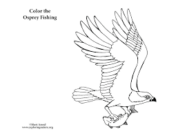 Coloring Pages Birds Bird Coloring Pages Bald Eagle Peregrine Falcon