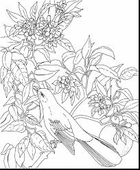 astonishing florida state bird coloring page with adult coloring ...