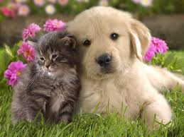 pictures of cute dogs and cats together. Cute Dog And Cat Throughout Pictures Of Dogs Cats Together