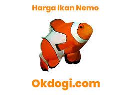Cara Merawat Ikan Nemo Air Tawar