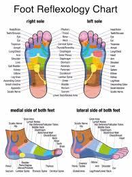 foot reflexology chart  screenshot  therapeutic foot massage