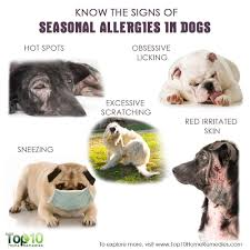 Know the Signs of Seasonal Allergies in Dogs | Top 10 Home Remedies