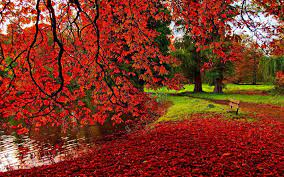 Free download Autumn Wallpaper HD let ...