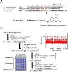 High Throughput Screening Of Small Molecule Inhibitors Of The