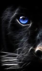 dark tiger eyes wallpaper
