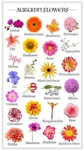Which flowers are in bloom in Autumn? - Avas Flowers